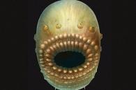 가장 오래된 인류 조상 화석 발견…원숭이 아닌 이것 (연구)