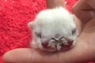 머리 2개, 눈 3개, 입 2개 가진 고양이 태어나