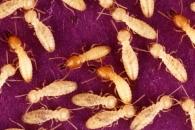 [와우! 과학] 흰개미는 개미의 발소리도 듣는다