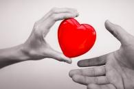 [와우! 과학] 기증된 인체 장기 '장기보존' 길 열렸다