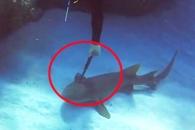 머리에 긴 칼 꽂힌 상어, 다이버에게 다가와… (영상)
