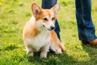 개도 인간 성격 파악해 적절히 이용한다 (연구)