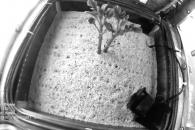 '화성 감자', 똑같은 조건 재배 성공했다 (연구)