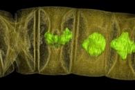 16억 년 된 화석서 '김의 시조' 홍조류 발견