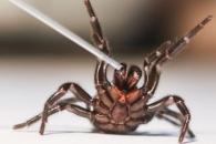 '5분에 1명' 뇌졸중, '거미 맹독'으로 뇌손상 막는다 (연구)