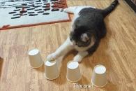 """""""야바위? 동작 그만!"""" 엄청 똑똑한 고양이 (영상)"""