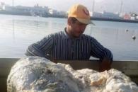 '바다의 로또' 28억원 짜리 고래똥 낚은 가난한 어부