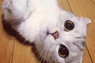 """[애니멀 픽!] """"귀엽냥?""""…동글동글한 고양이 하나"""