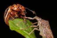 형제 잡아먹는 곤충… '골육상쟁 비밀' 밝혀지다
