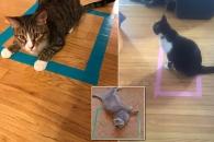 상자 아닌 '사각 테이프' 안에 들어가는 고양이…왜?