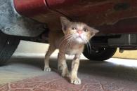 차 밑에서 울던 아기 길고양이, 애교 넘치는 반려묘 되다