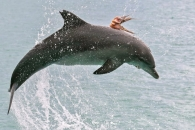 문어 태우고 점프하는 돌고래, 이유는?