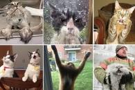 [애니멀 픽!] 연기대상감…리액션 좀 하는 고양이들