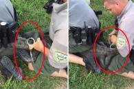 주거지 침입죄…수갑 채워져 체포되는 악어 (영상)