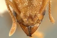 록밴드 '라디오헤드', 개미로 등장하다?