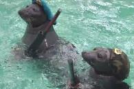 타깃 향해 물총 쏘는 '군인 바다표범' 영상