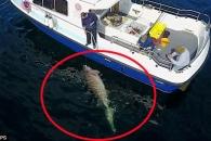 낚싯대로 잡은 7.6m 심해상어…75분 사투 결과