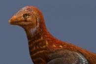 공룡에서 조류로 진화 과정 밝혀줄 신종 화석 발견