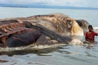 해변에 밀려온 15m 괴생명체…정체는?