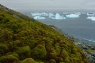 남극이 녹색으로 변하고 있다…축복? 재앙?