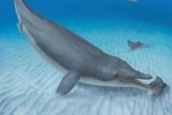 씹지 않고 먹이를 그냥 흡입…수염고래 조상을 찾다