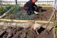 역시 불곰국? 밭일하는 여성 따라 흙 파는 아기곰(영상)