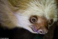 세계 최고령 나무늘보, 43세 나이로 숨져