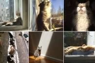 [애니멀 픽!] 야행성 맞아? 햇빛 즐기는 고양이들