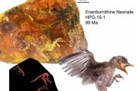 곧 날아갈 듯…9900만 년 전 '아기 새' 화석 발견