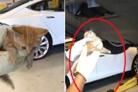 자동차에 14시간 끼어있던 새끼 고양이 구출