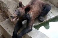 中동물원서 뼈가 앙상히 드러난 곰 포착…학대 논란