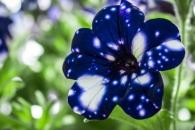 [모바일 픽!] 은하를 담아내다…별을 품은 꽃 화제