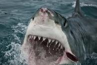 200만년 전 해양 생물 대량 멸종…재현될 수 있다 (연구)
