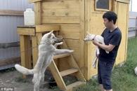 韓 복제 강아지, '생물학적 어미' 처음 만난 순간