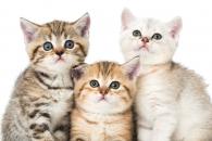 고양이 19마리 둘러싼 실종 및 독살 사건
