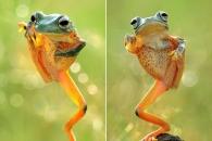 [애니멀 픽!] 쿵후 고수? 춤꾼? 묘한 개구리