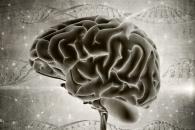 [알쏭달쏭+] 남자의 뇌 vs 여자의 뇌, 더 활발한 쪽은?