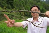 세계에서 가장 긴 곤충, 中 발견…길이 64㎝ 대벌레