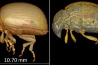 [고든 정의 TECH+] 해충 박멸 돕는 '마이크로 CT'