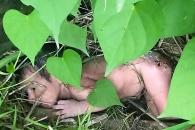'딸'이라는 이유로 가시 투성이 덤불에 버려진 아기