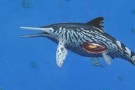2억 년 전 바다 누빈 임신한 '어룡 화석' 박물관서 발견