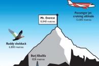 히말라야 산맥 넘는 '황오리'…오리 중 최고도 비행