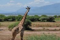 기린의 목은 왜 길고 가늘까?