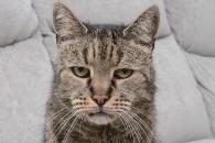 사람 나이로 144세…최고령 고양이 세상 떠났다