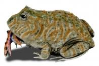 [와우! 과학] 백악기 말 공룡 잡아먹은 개구리
