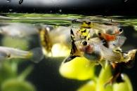 """""""물고기도 인간처럼 각자 개성이 있다"""" (연구)"""
