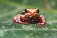 [와우! 과학] 독개구리가 자신의 독에 중독되지 않는 이유