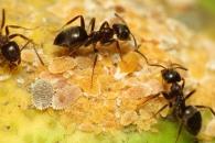 [와우! 과학] 개미의 매장 풍습? 동료 묻어주는 여왕개미