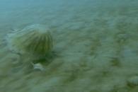 알래스카 겨울 버티고 살아남은 희귀 대형 해파리 포착