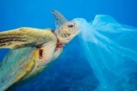[와우! 과학] '인간의 이기' 플라스틱, 심해생물도 오염시키다